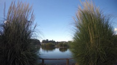 Reeds and Lake — Stock Video
