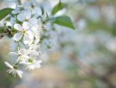 Spring flowering trees — Stock Photo