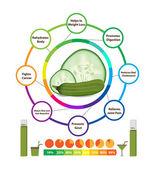 Amazing Health Benefits of cucumber — Stock Vector