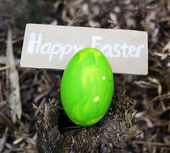 Photo of colorful easter eggs — Zdjęcie stockowe