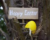 красочные пасхальные яйца — Стоковое фото