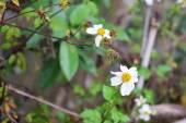 Colorful wildflowers blossoming — Zdjęcie stockowe