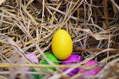 Ovos de páscoa coloridos no ninho — Fotografia Stock