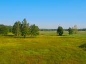 Siberian meadow with birches — Stock Photo