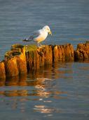 Seagull sitting on a pillar — Stock Photo