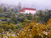 Chongu monastery in Yading — Stock Photo