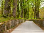 Park road with walls and trees around — Stock Photo