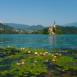 Bled Island and Lake with water lilies — Stock Photo #81130698