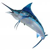 Blue Marlin Front Profile — Stock Photo