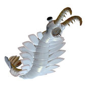 Cambrian Anomalocaris Underside — Stock Photo