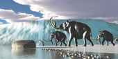 Glacier Mammoths — Stock Photo