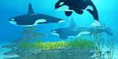 Killer Whale Reef — Stock Photo