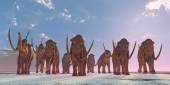 Columbian Mammoth Herd — Stock Photo