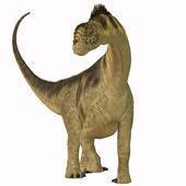 Camarasaurus on White — Stock Photo