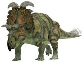 Albertaceratops lived in the Cretaceous Period. — Foto Stock