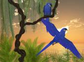 Hyacinth Macaws — Stock Photo