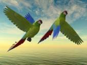 Military Macaw — Stock Photo