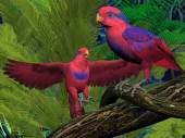 Красный и синий Лори попугаи — Стоковое фото
