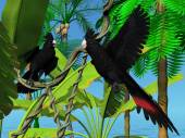 Red-tailed Black Cockatoos — Stock Photo