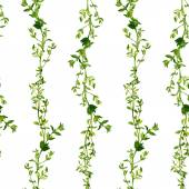 Seamless pattern with branches of thyme — Stockvektor