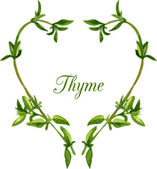 Heart by sprigs of thyme — Stock Vector