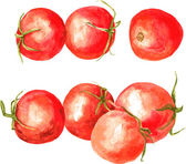 Set of  watercolor drawing tomatoes — Stock Vector