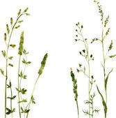 Siluety květin a trávy — Stock vektor