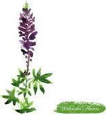 Lupine drawing by watercolor — Stockvektor