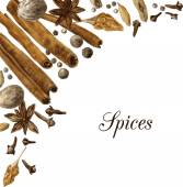 Spices drawing by watercolor — Stock Vector