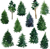 Set of conifer trees — Stock Vector