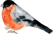 Watercolor drawing bird — Stock Vector