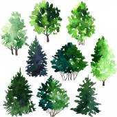 Set of trees drawing by watercolor — Stock Vector