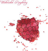 Raspberry drawing by watercolor — Stock Vector