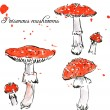 ������, ������: Set of watercolor drawing poisonous mushrooms