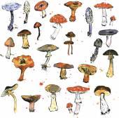 Set of watercolor drawing mushrooms — Stock Vector