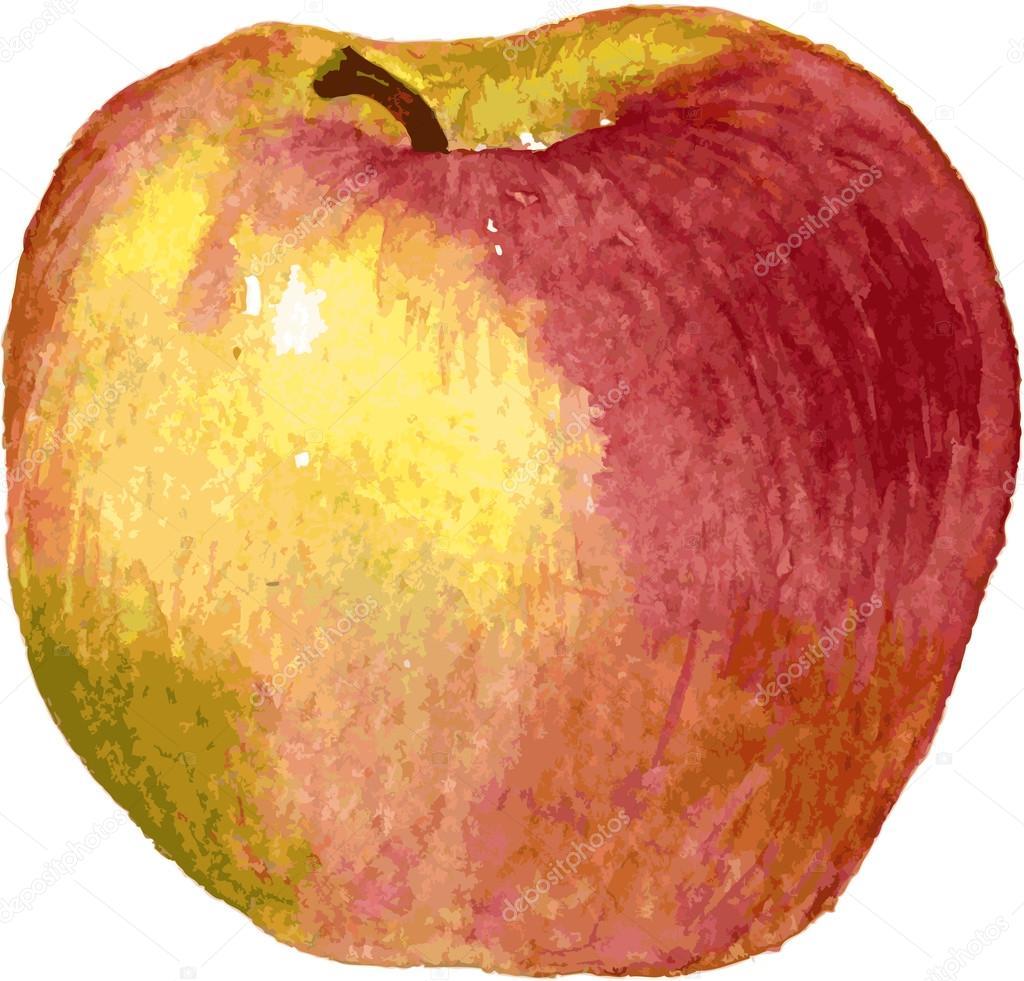 Pomme dessin par aquarelle image vectorielle cat arch - Dessin pomme apple ...