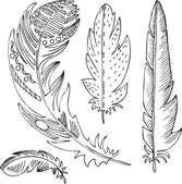 Set of line drawing feathers — Stock Vector
