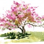 Постер, плакат: Cherry blossom tree