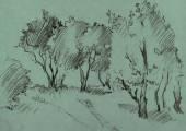 Bosque de árvores de folha caduca — Vetor de Stock