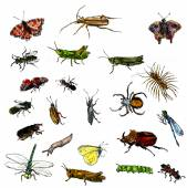 Set of watercolor drawing insects — Stock Photo