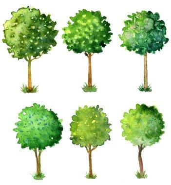Watercolor flowering trees