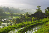Bali rice paddy — Stock Photo