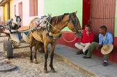 Cuban coachman — Foto de Stock