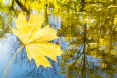 Yellow maple leaf on a background of water reflections of autumn — Foto Stock