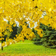 Linden branches with yellow autumn leaves backlit — Stock Photo #53492137
