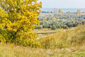 Autumn ash on top of a hill — Stockfoto