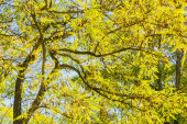 Branches of the locust with autumn foliage — Stock Photo