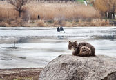 Cat on winter fishing — Stok fotoğraf