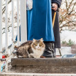 Cat on a walk on a winter day  — Stock Photo #60008707