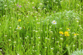 Green spring lawn with wildflowers — Stock Photo